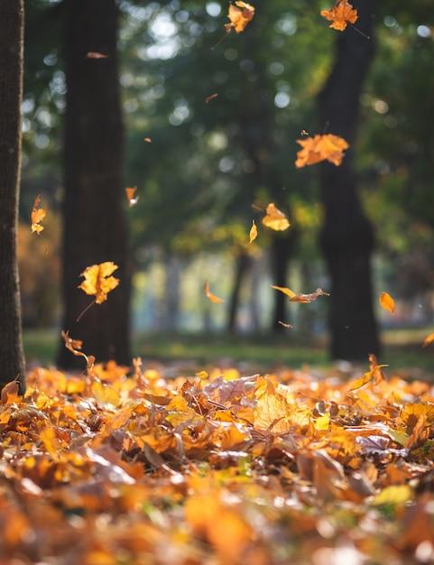 Vista, de, a, outono, parque cidade, com, árvores, e, secos, amarelo sai Foto Premium