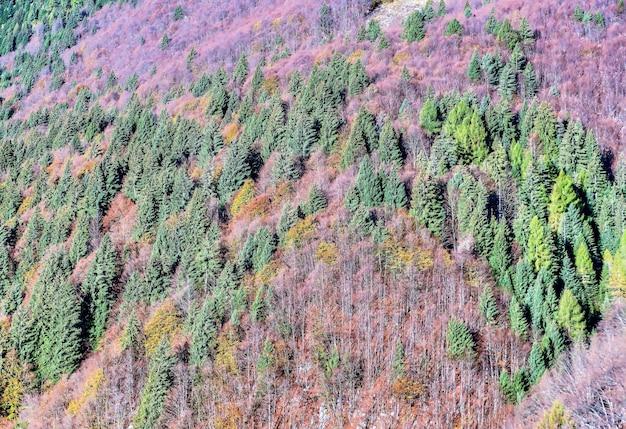 Vista de alto ângulo de árvores verdes e plantas roxas crescendo nas colinas Foto gratuita