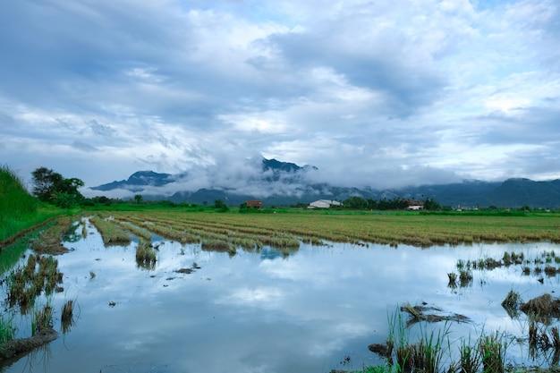 Vista, de, arquivado, de, arroz, com, céu azul, e, montanha, fundo Foto Premium