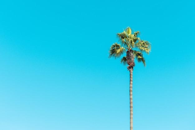 Vista de baixo ângulo de palmeiras sob um céu azul e luz do sol durante o dia Foto gratuita