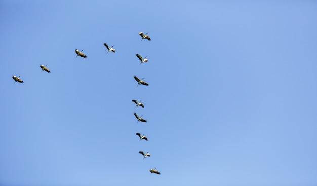 Vista de baixo ângulo de um bando de pássaros voando no céu azul durante o dia Foto gratuita
