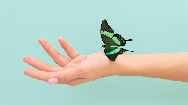 Vista de close-up de uma borboleta sentada por lado Foto gratuita