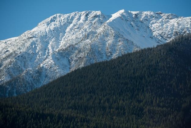 Vista de montanha coberta de neve e floresta verde Foto gratuita