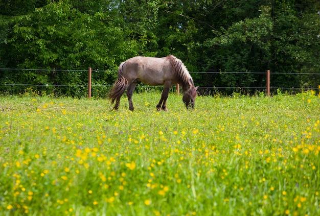Vista de tarpan, cavalos selvagens Foto Premium