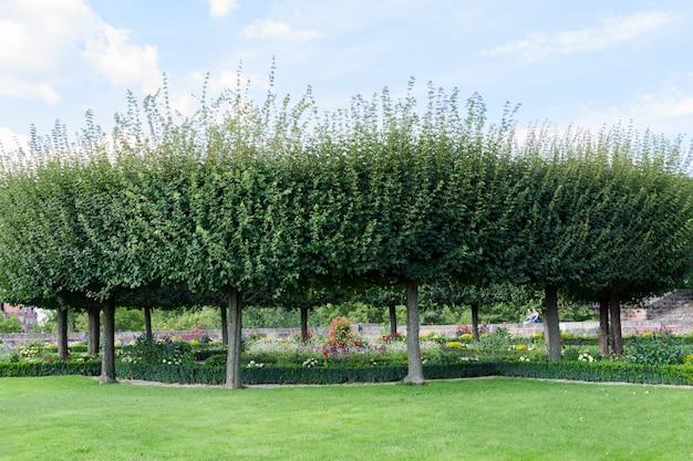 Vista de um gramado verde com árvores redondas e uma cama de flor com flores. Foto Premium
