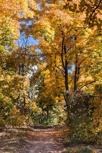 Vista, de, um, vazio, trilha andando, em, outono, floresta Foto gratuita