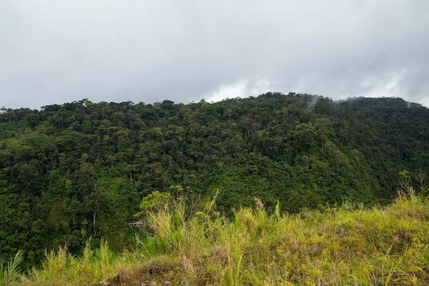 Vista, de, verde, costa, rican, floresta tropical Foto gratuita