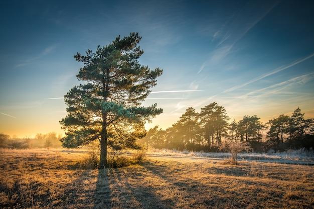 Vista deslumbrante de uma árvore em um campo com uma linha de árvores ao fundo sob o lindo céu Foto gratuita