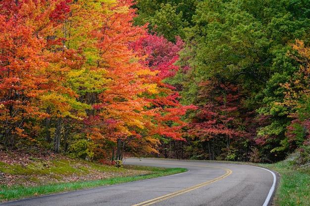 Vista deslumbrante do outono em uma estrada cercada por belas e coloridas folhas de árvores Foto gratuita