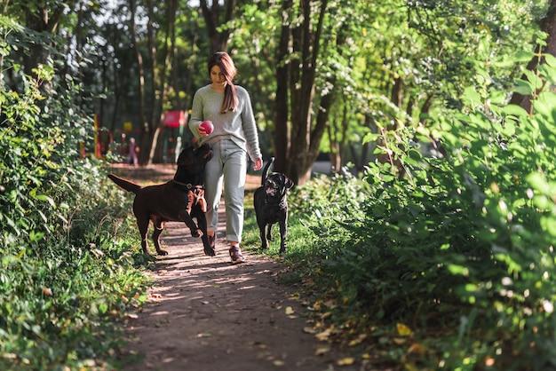 Vista dianteira, de, um, mulher caminhando, com, dela, dois, labradors, em, rastro, em, parque Foto gratuita