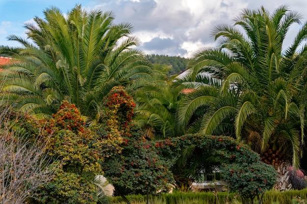 Vista do beco das palmeiras no parque e verde exuberante em um dia ensolarado. foco seletivo Foto Premium