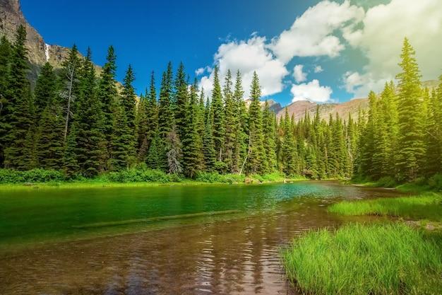 Vista do parque nacional glacier, pinheiros de inverno em montanhas rochosas Foto Premium