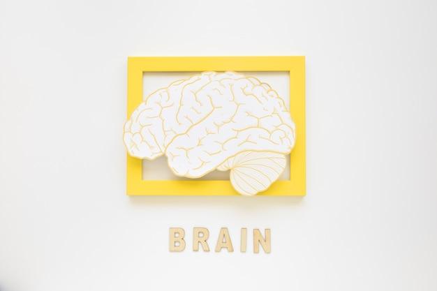 Vista elevada, de, quadro cérebro, com, texto Foto gratuita