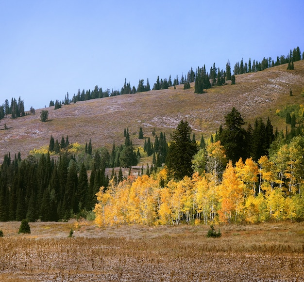 Vista fascinante das árvores coloridas perto das colinas no outono Foto gratuita