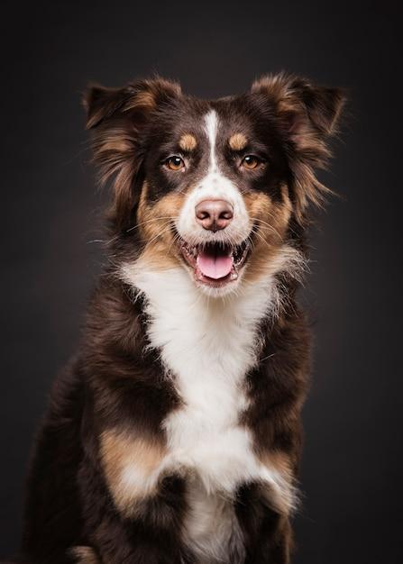 Vista frontal bonito cão sentado Foto gratuita