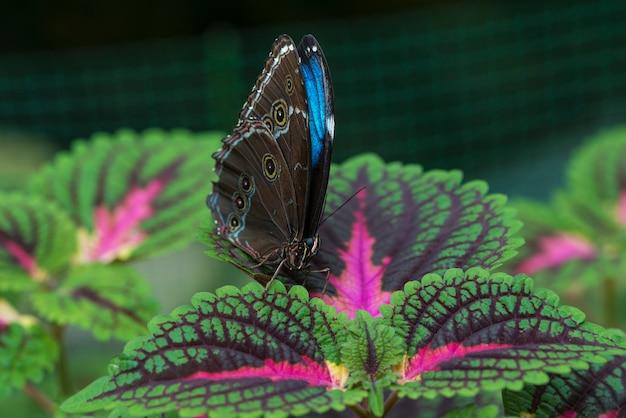 Vista frontal borboleta azul na folha Foto gratuita