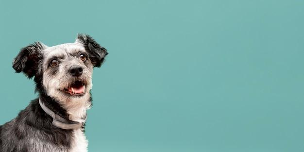 Vista frontal de um adorável filhote de cachorro sem raça definida com espaço de cópia Foto Premium