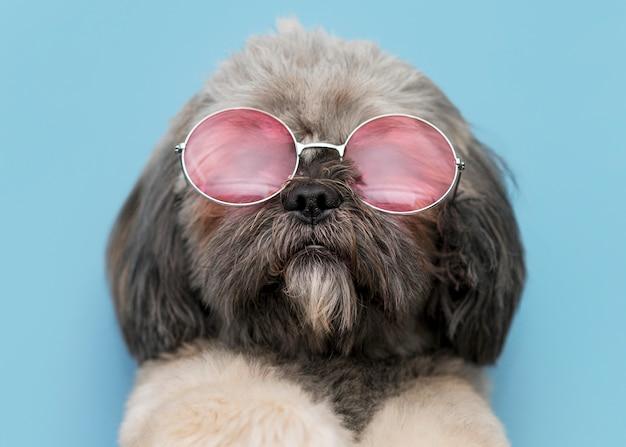 Vista frontal do conceito de cachorro fofo engraçado Foto gratuita