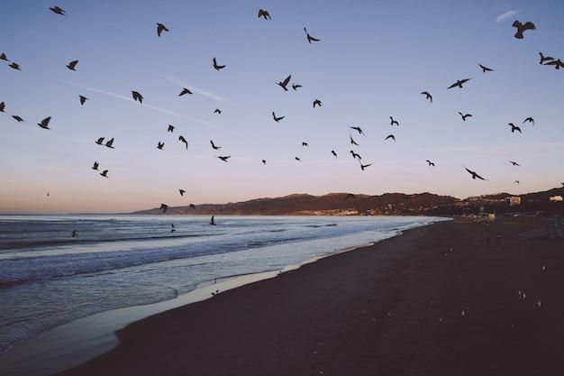 Vista hipnotizante de uma praia com pássaros voando sobre ela Foto gratuita