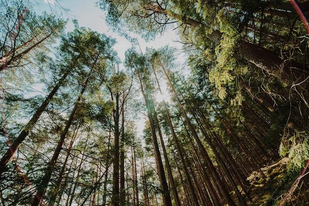 Vista inferior de um grupo de árvores Foto gratuita