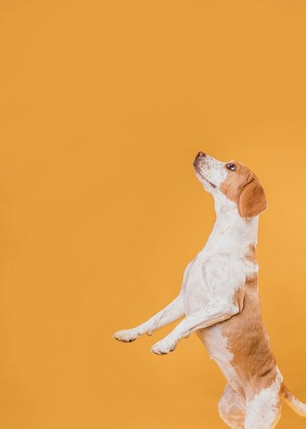 Vista lateral, cão, ficar, ligado, pernas traseiras Foto gratuita