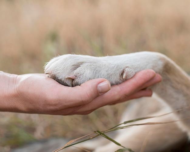 Vista lateral da pessoa segurando a pata do cachorro Foto gratuita