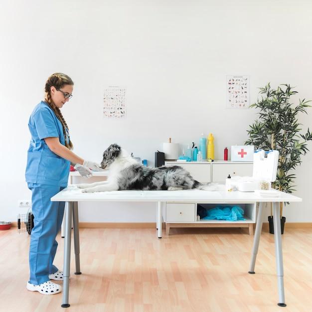 Vista lateral, de, sorrindo, femininas, veterinário, com, cão, ligado, tabela, em, a, clínica Foto gratuita