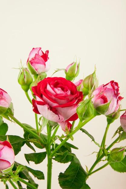 Vista lateral de um buquê de flores rosas coloridas com botões de rosa em fundo branco Foto gratuita
