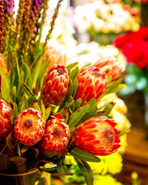 Vista lateral do buquê de botões de flores de rei vermelho protea Foto gratuita