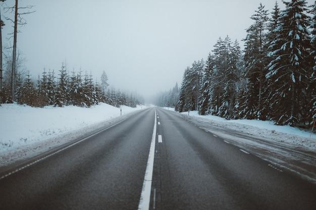 Vista magnífica de uma estrada cercada por árvores em campos cobertos de neve capturados na suécia Foto gratuita