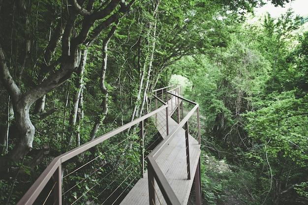 Vista panorâmica da ponte de ferro na floresta tropical Foto Premium