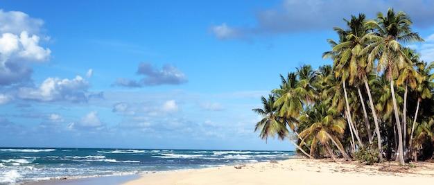 Vista panorâmica da praia do caribe sob o sol Foto gratuita