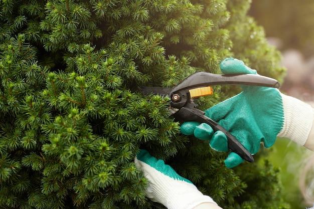 Vista recortada de trabalhador de jardinagem usando luvas de proteção enquanto poda as plantas Foto gratuita