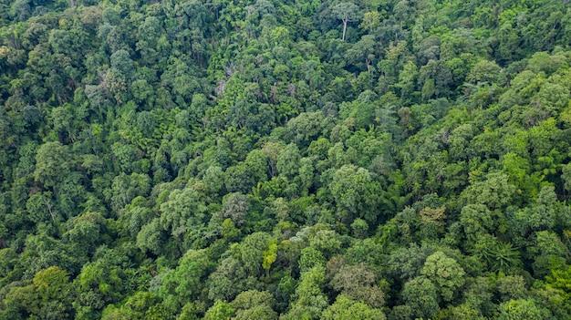 Vista superior aérea da floresta textura vista de cima Foto Premium