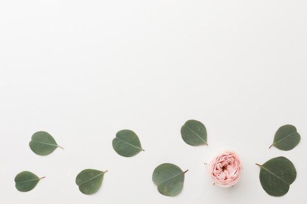Vista superior arranjo de folhas verdes e rosa cópia espaço Foto gratuita