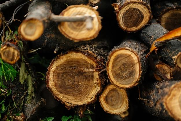 Vista superior closeup em troncos de árvores naturais cortados Foto Premium