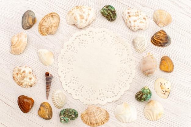Vista superior conchas do mar diferentes formadas e coloridas no fundo branco mar oceano concha de água do mar Foto gratuita
