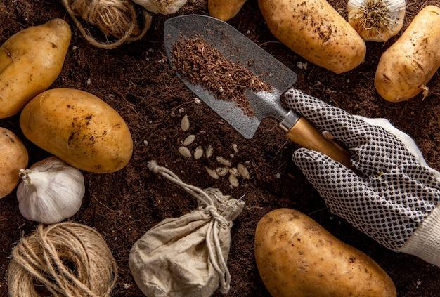 Vista superior da ferramenta de jardim com batatas e alho Foto gratuita