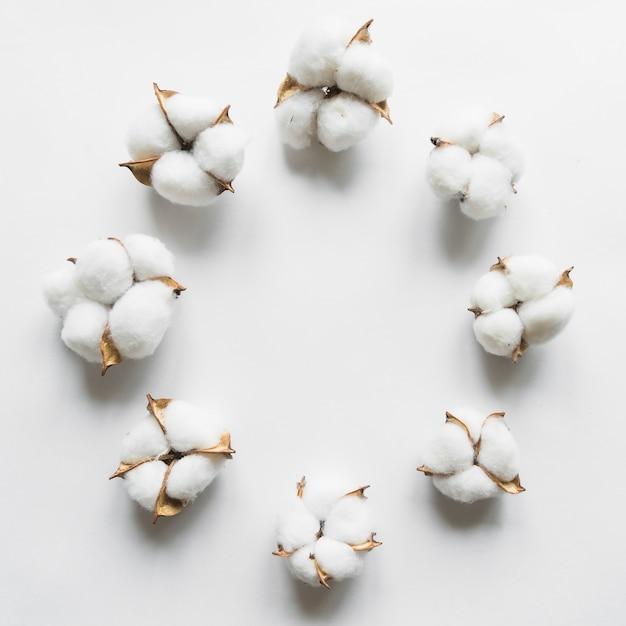 Vista superior da flor de algodão Foto gratuita