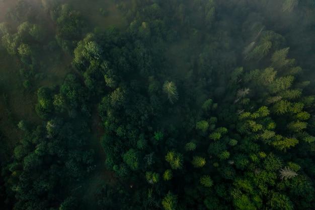 Vista superior da floresta mista colorida, envolta em névoa da manhã em um lindo dia de outono Foto gratuita