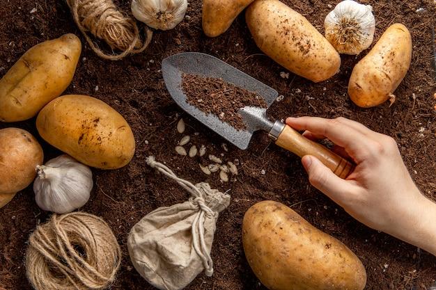 Vista superior da mão segurando a ferramenta de jardim com batatas Foto gratuita