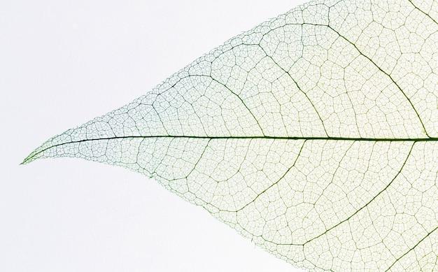 Vista superior da textura da folha transparente Foto gratuita