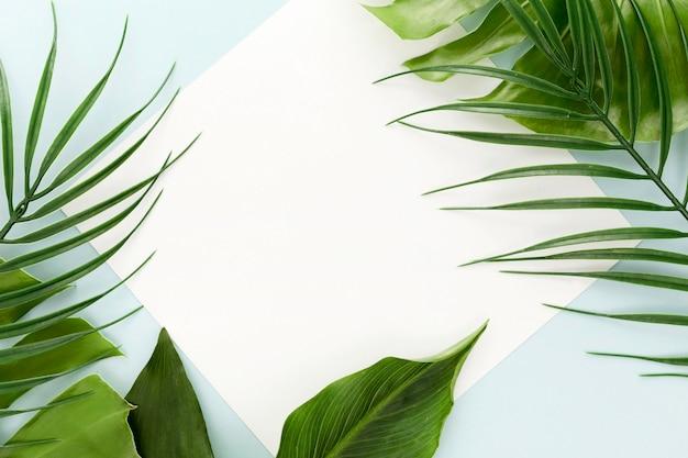 Vista superior da variedade de folhas diferentes Foto gratuita