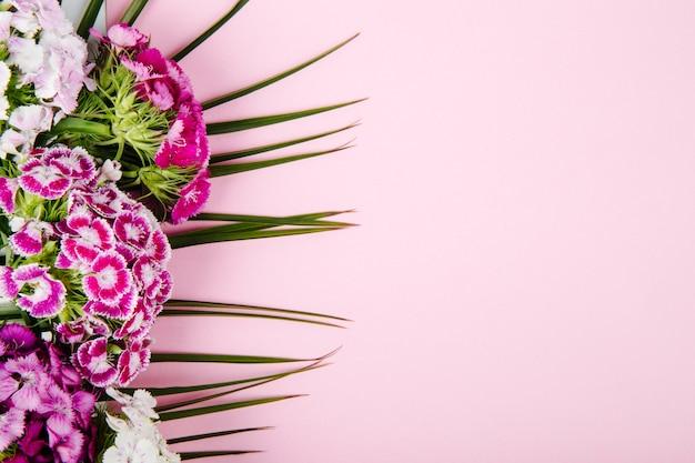 Vista superior das flores roxas e brancas doces william ou cravo turco isoladas na folha de palmeira em fundo rosa com espaço de cópia Foto gratuita