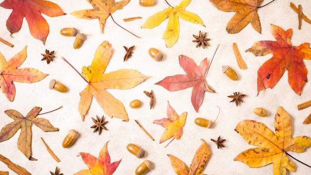 Vista superior das folhas de outono com bolotas Foto gratuita