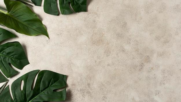 Vista superior das folhas tropicais com espaço de cópia Foto gratuita