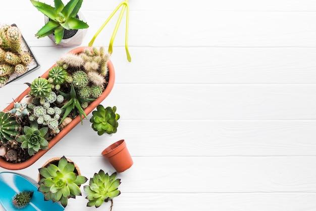 Vista superior das plantas em uma superfície de madeira Foto gratuita