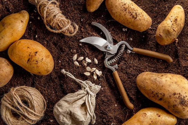 Vista superior de batatas com tesoura e barbante Foto gratuita