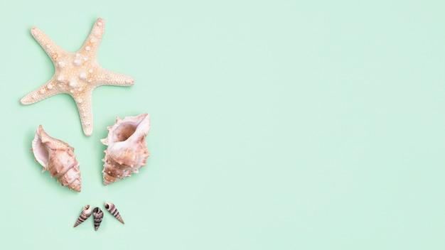 Vista superior de conchas do mar, com espaço de cópia e estrela do mar Foto gratuita