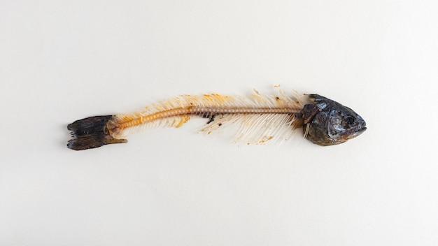 Vista superior de espinhas de peixe na mesa Foto gratuita